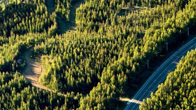 plantación en las cercanías de Cañete, Chile, este tipo de plantación altera el cambio climático