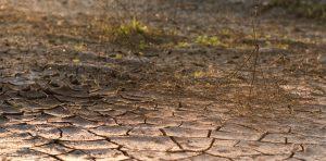 suelo seco, desertificación