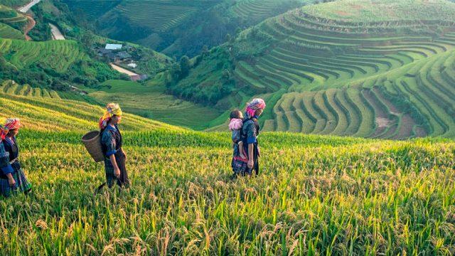 personas caminando por los campos de arroz en China