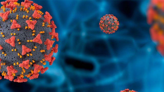 en la fotografía una imagen microscópica de un virus