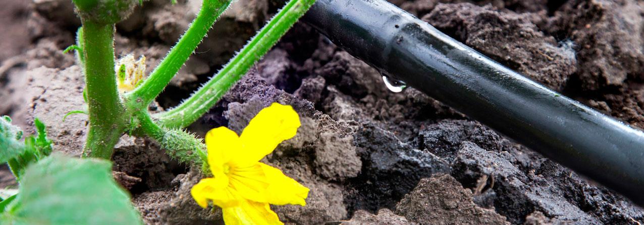 en la imagen una flor al lado de una tubería de agua